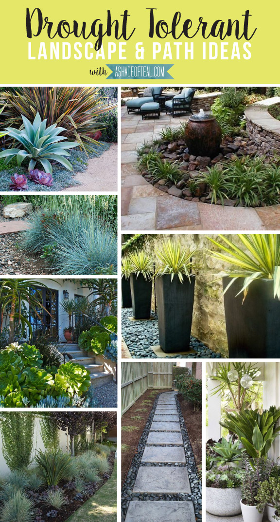 drought tolerant landscape path ideas a shade of teal. Black Bedroom Furniture Sets. Home Design Ideas
